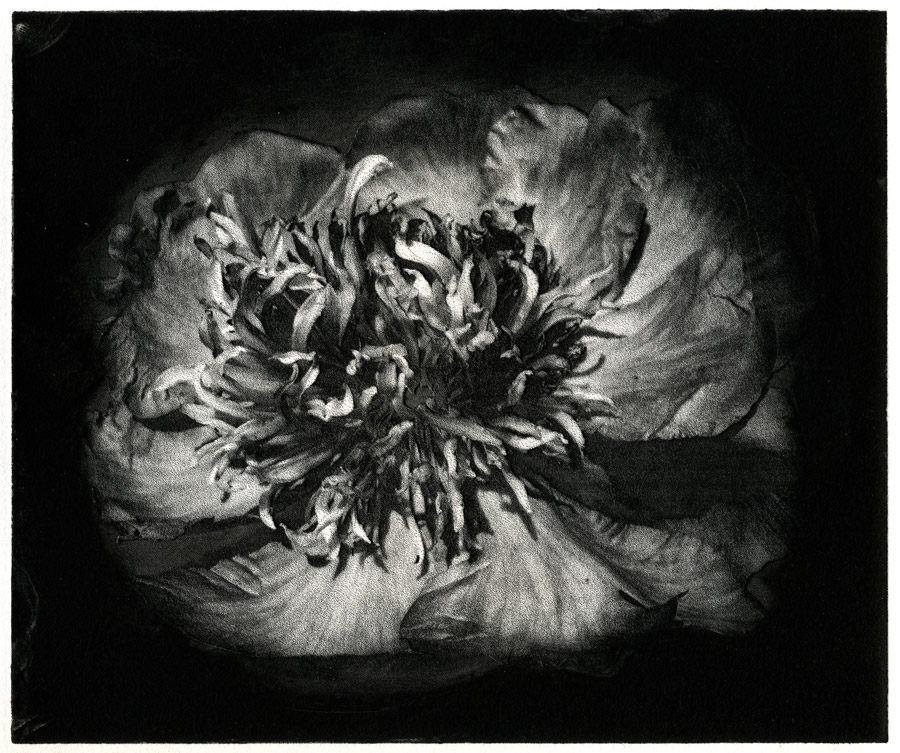 solarplate-flower