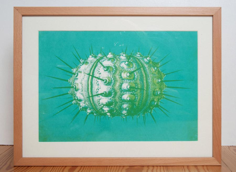 urchin-aqua-by-ambigraph