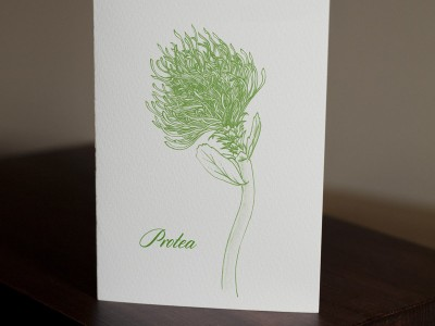 protea-card-by-ambigraph