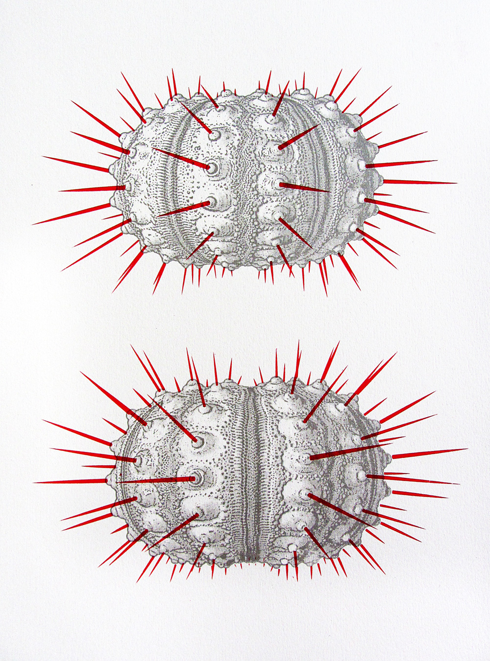 urchin spines screen print by ameet hindocha ambigraph