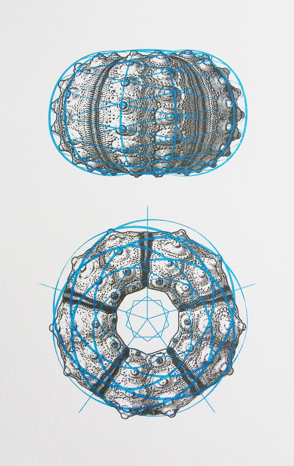 urchin spirals screen print by ameet hindocha ambigraph