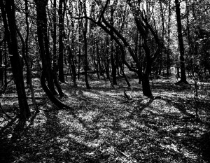 dappled-forest-print by ambigraph