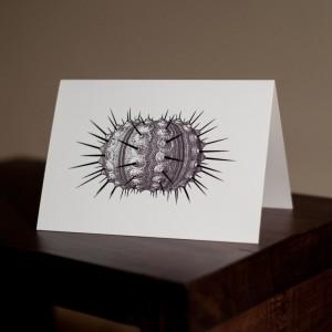 urchin-card-by-ambigraph