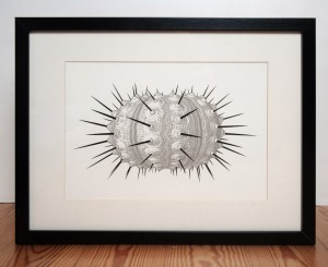 urchin-silver-and-black-by-ambigraph